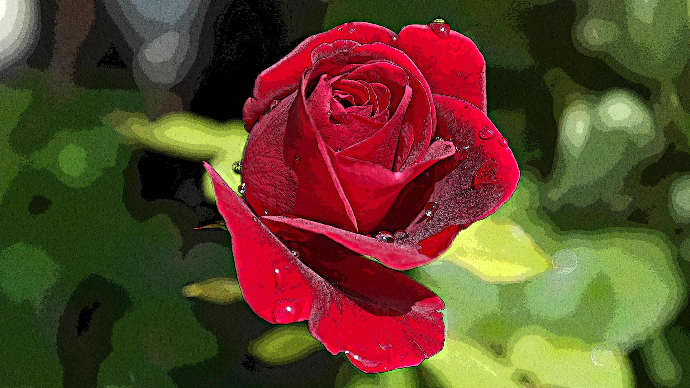 rose-402671retouchée2